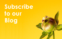 Subscribe to the John Robert's Blog